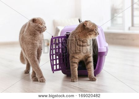 Cute funny cats playing with plastic carrier at home