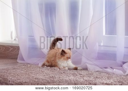 Cute little kitten playing with curtain at home