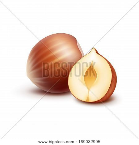 Vector Full and Half Peeled Unpeeled Realistic Hazelnuts Close up Isolated on White Background