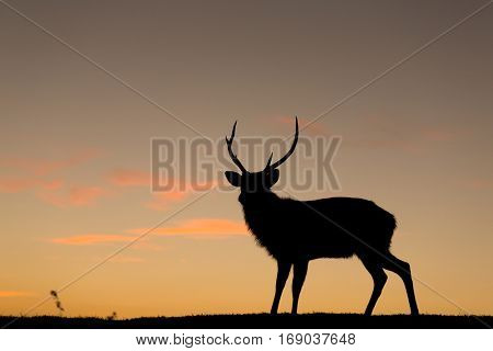 Deer silhuette with a colorful sunset