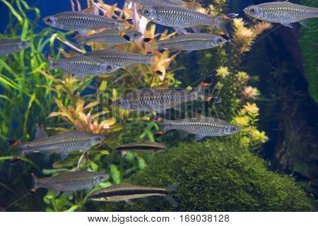 a group of fishes swimming at an aquarium