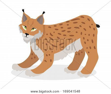 Lynx, bobcat, wildcat isolated on white. Cat family member. Lynx genus of medium-sized wild cats. Felids. Caracal, Jungle cat. Flat style. Vector illustration