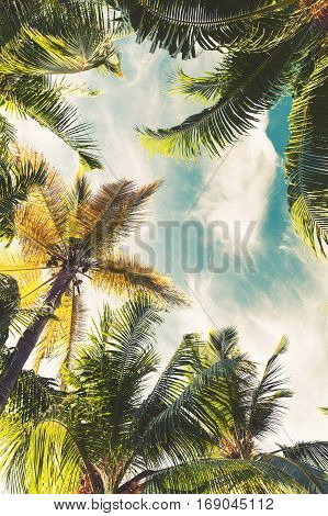 Coconut Palm Trees Over Sky, Toned