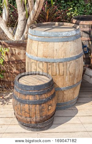 Small and large oak barrel planter use for decoration in garden with country style.