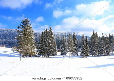 Mitrovac plateau at Tara mountain and national park, west Serbia