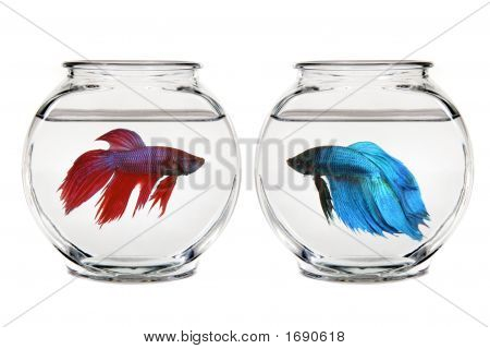 Contenedor vacío tranquilo de agua con peces Beta