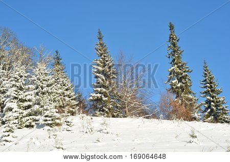 Winter nature. Winter forest landscape snowy winter forest - winter sunny landscape