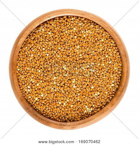 Wholemeal brown millet in a wooden bowl. Reddish colored archetype millet grains. Mineral rich cereal. Edible, raw, wild and organic. Isolated macro food photo close up from above on white background.