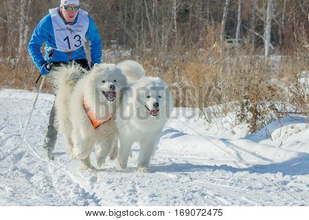 Irkutsk, Russia - January 28, 2017: Racing Competition For Dog S