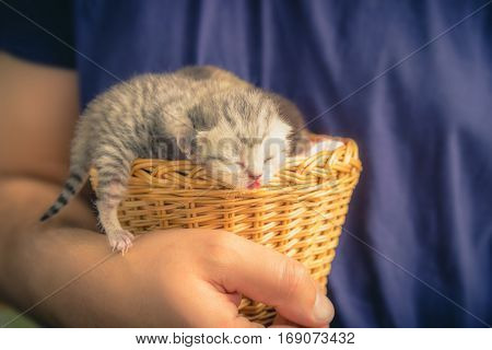 Basket with young kittens in male hands. Beauty and tenderness