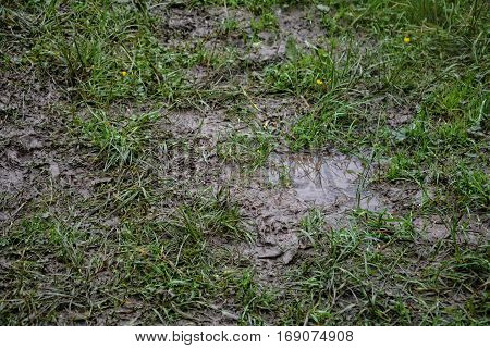 Mud green  meadow after rain with earth