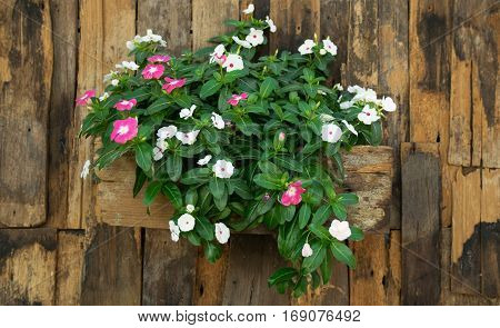 Flowerpot Wall on Old slat wood wall vintage style