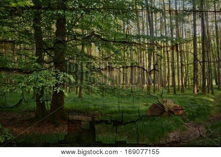 Morning in the forest with thick tree trunk in the foreground    and a tree left  , with Texture