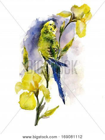 Colorful parrot (budgie) sitting on yellow iris twig on blue background. Watercolor painting hand drawn. Vertical orientation.