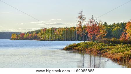 Late summer warm day on a lake near the wood's edge.   Seasonal colors along forest's edge, emboldened by late afternoon, golden sunlight.
