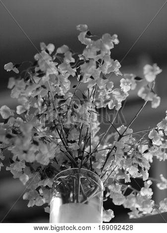 BLACK AND WHITE PHOTO OF BURMA PADAUK (PTEROCARPUS MACROCARPUS)