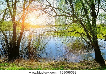 Spring landscape - spring willow under spring sunshine on the bank of the small spring river. Colorful spring landscape view of spring nature
