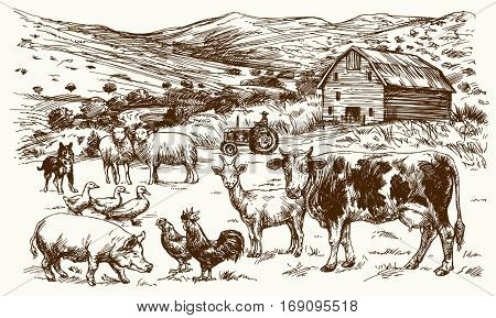 Farm animals. Hand drawn vector illustration.