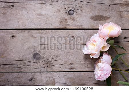 Fresh pink peonies flowers on vintage wooden background. Flat lay. Place for text. Selective focus. Floral still life.