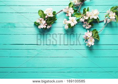 Apple tree flowers on bright turquoise wooden background. Selective focus. Place for text. Top view. Flat lay. Toned image.