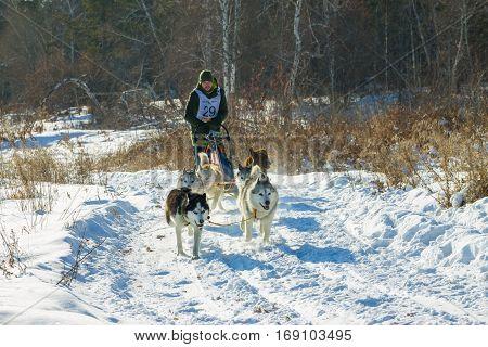 Irkutsk, Russia - January 28, 2017: Racing competition for dog sledding and skijoring Angara beads 2017.