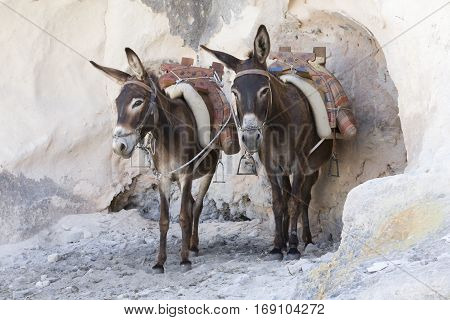 Donkeys waiting for new people to carry up the mountain in Lindos, Rhodos, Greece