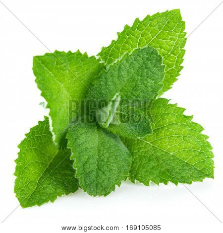 Fresh leaf mint green herbs ingredient for mojito drink. Isolated on white background