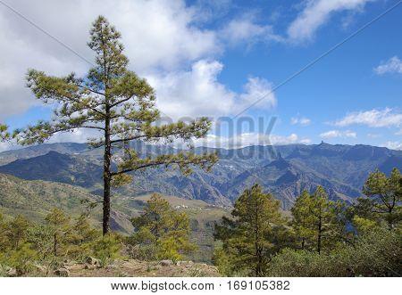 central Gran Canaria view towards Roque Bentayga and Roque Nublo from a path to Montana Altavista