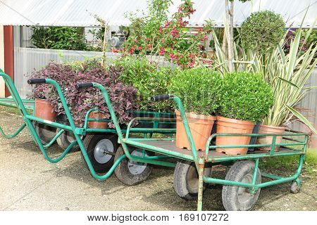 Wagons With Plants In Wait In The Commercial Garden Center