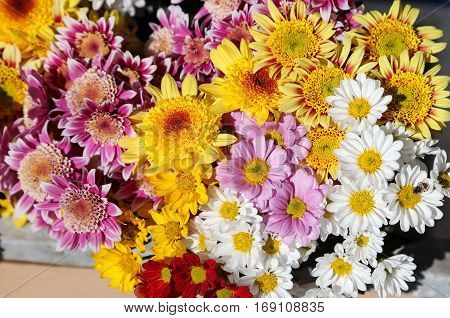 Gerbera flower. colour full of Gerbera flower.