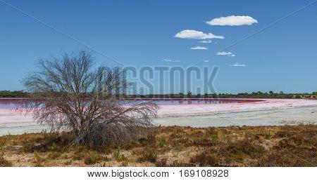 Loch Lel - Pink Lake In Victoria, Australia.