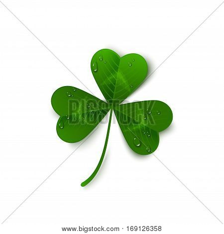 Saint Patrick's Day green three leaf clover with dew drops isolated on white background. Holiday 3d icon. Vector illustration. Spring symbol.