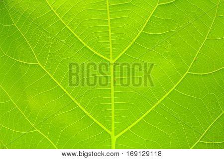 Beautiful leaves orange leaf texture background .