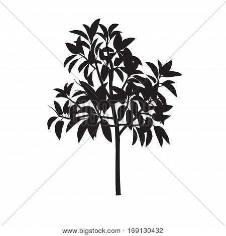 Ficus silhouette on a white monophonic background