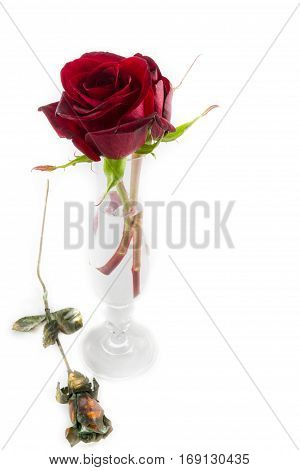 Roses And Vase On White Valentines Day Composition