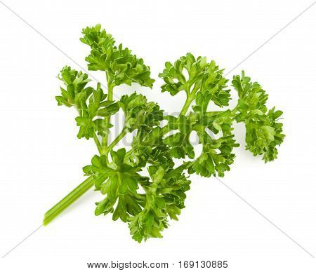 Fresh Green Parsley Isolate