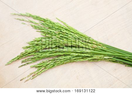 rice green spike on wood background .