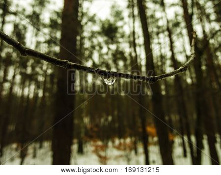 Watedrop in close up.Macro photography,Winter scenery in forest