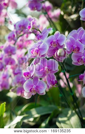 Purple orchid flower in garden show nature concept