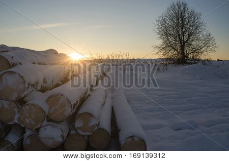 The logs in the snow lit by the setting sun.