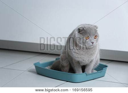 Cute funny cat in litter-box at home