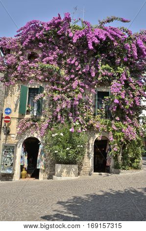 SIRMIONE, ITALY - AUGUST 7, 2014: House covered with bougainvillea in the village of Sirmione on lake Garda Italy.