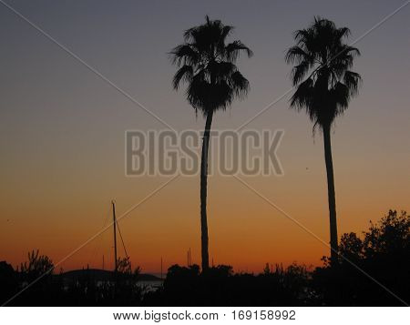 Two palm trees at the sunset, Hvar, Croatia