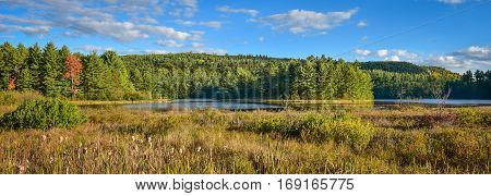Sunny Summertime marsh and boreal forest woodland wilderness as viewed from the roadside of an Ontario, Canada highway.