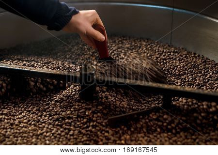 Cropped image of cooling container and male hands inspecting and roasting coffee beans