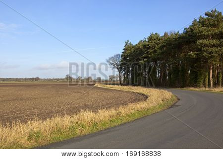 Pine Copse And Country Road
