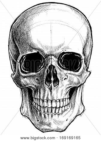 Skull Drawing line work vector for use.