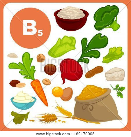 Set of organic food with vitamin B5. Ingredients for health: vegetable - broccoli, beet and carrot, meal, egg and cheese, nuts, creame. Healthy nutrition, diet with B 5 sources. Vector icons