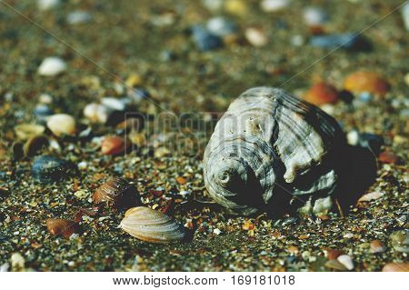 Shells on the beach bright day closeup.