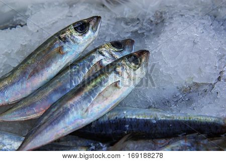 A group of sardines with salt ready to be cooked